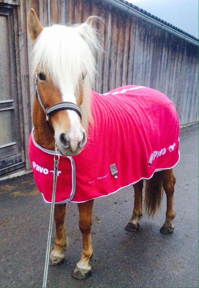 Nike genießt ihr Leben bei Elena und hat sich zum richtigen Dressurpferd gemausert. Foto: Elena-Victoria Gschnitzer
