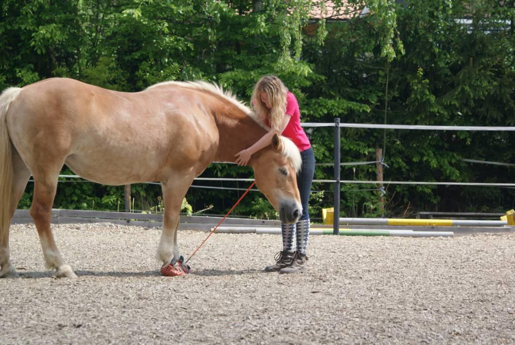 Worte, lächeln und positive Gedanken kann euer Pferd spüren! Foto: Haflinger Austria