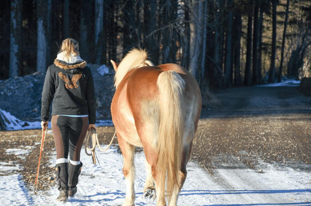 Lange Warm-up-Phasen im Schritt sind wichtig für die Gelenke. Foto: Haflinger Austria