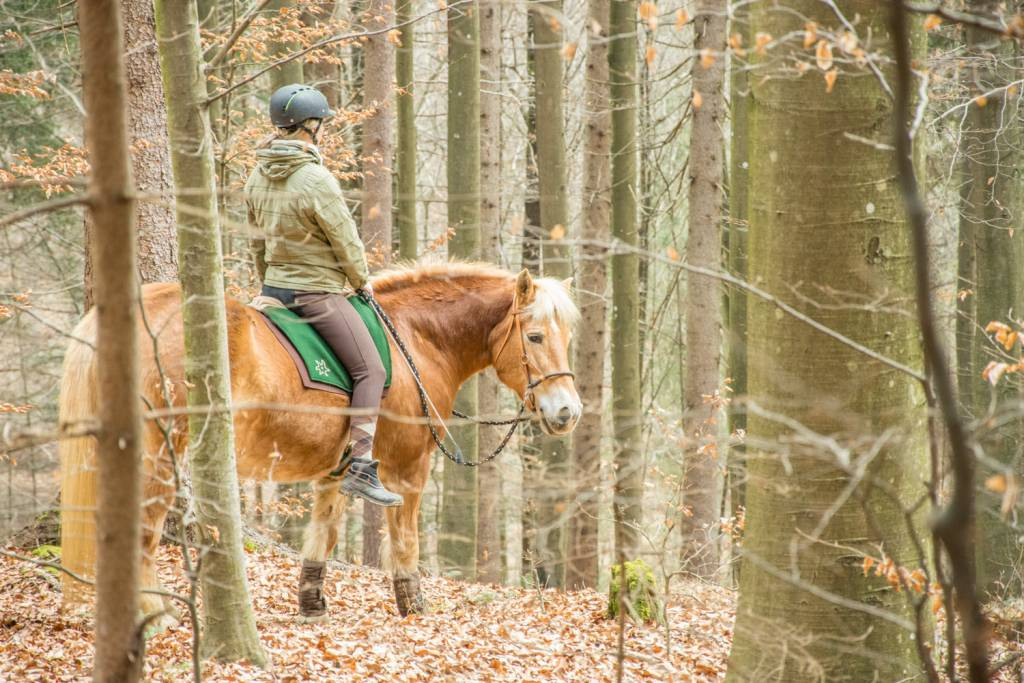 Aufrecht und entspannt am Pferd sitzen. Mit dem Filzsattel kein Problem. Foto: Haflinger Austria