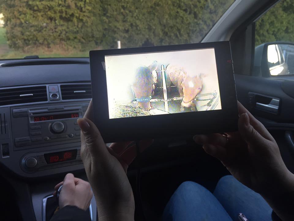 Wir machen uns trotz Turbulenzen vom Vortag auf den Weg. Brutus und Indy sind verladen. Die Hänger-Kamera zeigt sie seelenruhig fressen und es kann losgehen. Foto: Haflinger Austria