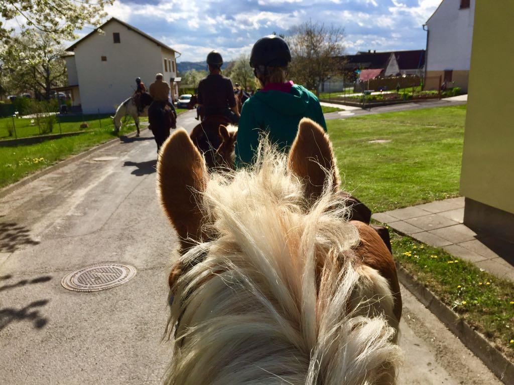 Hier der Bericht über den Wanderritt ins Burgenland. Foto: Haflinger Austria