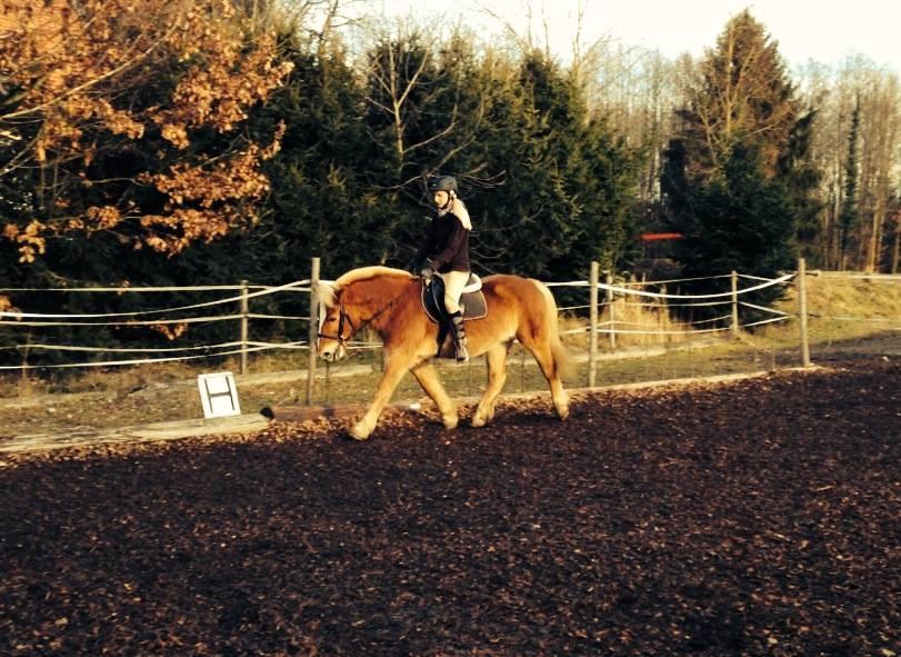Sandra betreut die unterschiedlichsten Pferde und Reiter, darunter auch einige Hafis, wie zum Beispiel Julia mit ihrem Professor Filou. Foto: Julia G.