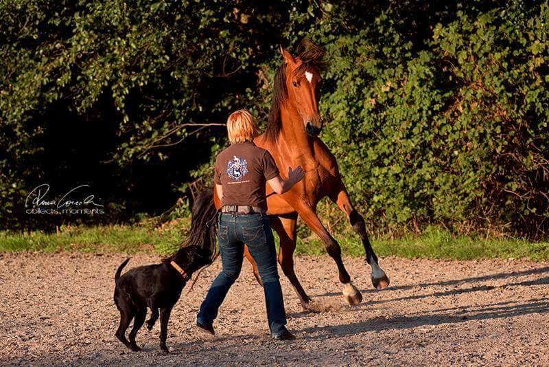 Es geht darum, sich selbst besser kennenzulernen und dies dem Pferd zur Verfügung zu stellen. Foto: Lehrmeister Pferd von collect moments