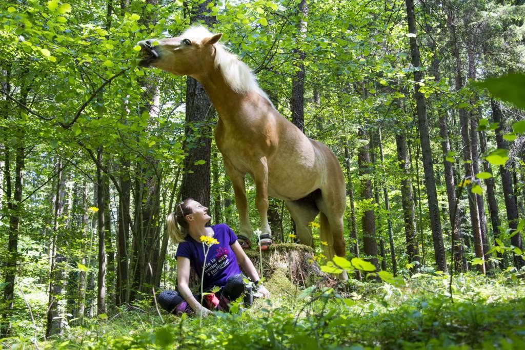 Das Pferd lebt wie ein König und der Reiter wie ein Bettler? Foto: Haflinger Austria