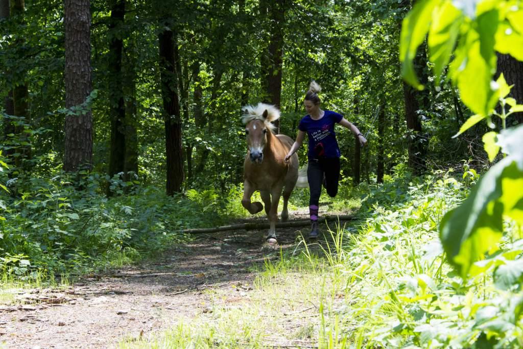Beim Reiten geht es um ein Zusammenspiel zwischen Pferd und Reiter. Mit diesen Tipps legst du einen wichtigen Grundstein. Foto: Haflinger Austria