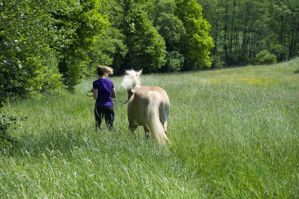 Eine gute Basis schaffen für ein gesundes Zusammenspiel zwischen Pferd und Reiter. Foto: Haflinger Austria
