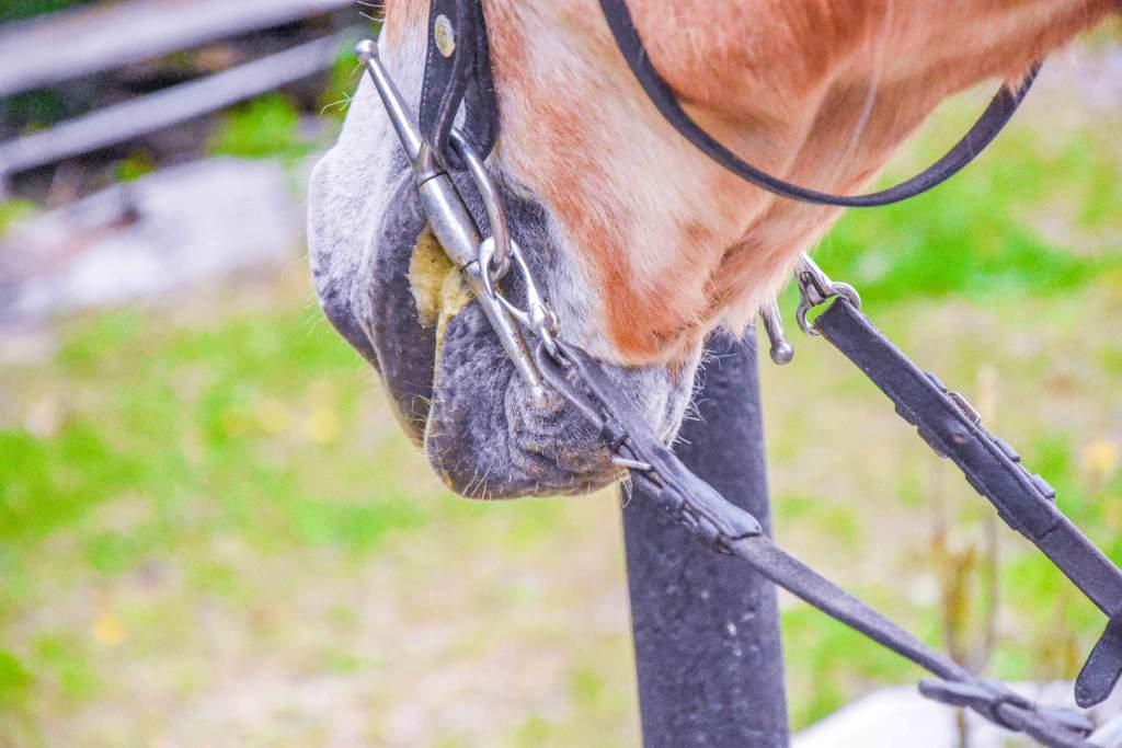Vieles ist in der Reiterwelt so, weil es schon immer so war. Hinterfrage es, vielleicht willst du was ändern. Foto: Haflinger Austria