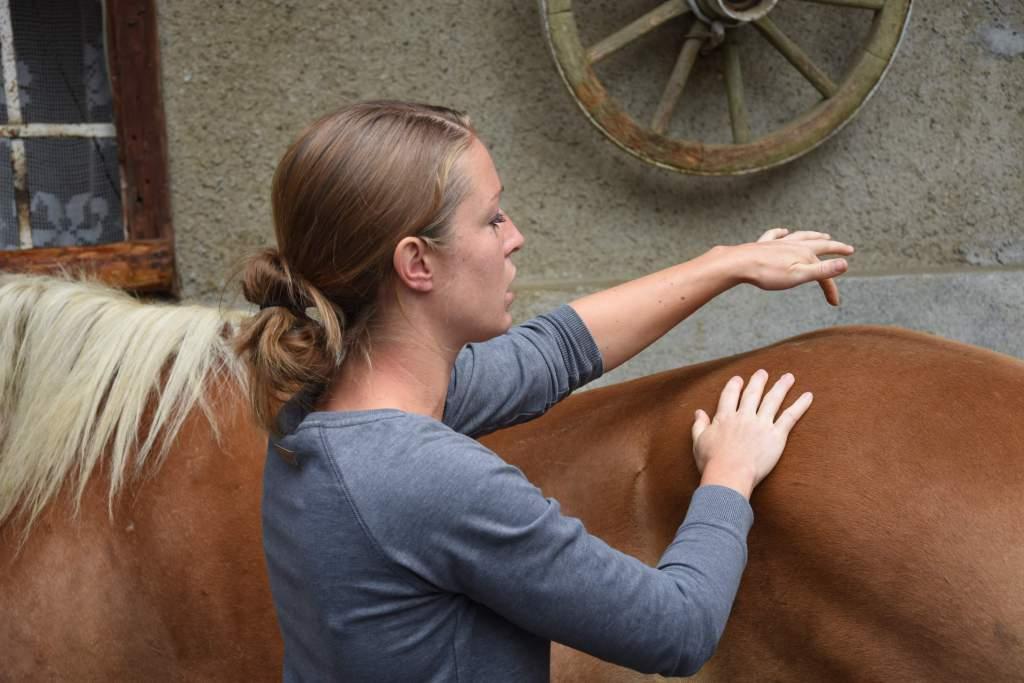 Lady lässt sich beim Praxisteil verwöhnen. Foto: Haflinger Austria