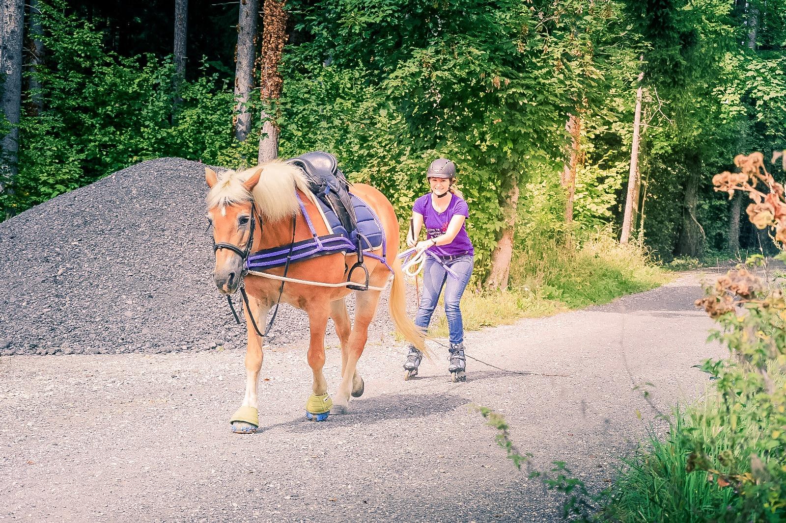 Wir starten unser Projekt auf Rollen. Foto: Haflinger Austria