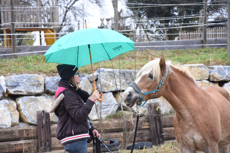 Sollte es mal regnen, der Regenschirm ist kein Problem für Henni. Foto: Haflinger Austria