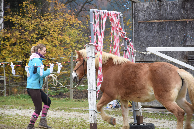 """Sissy geht nach dem Motto """"Augen zu und durch"""" durch den Flattervorhang. Foto: Haflinger Austria"""