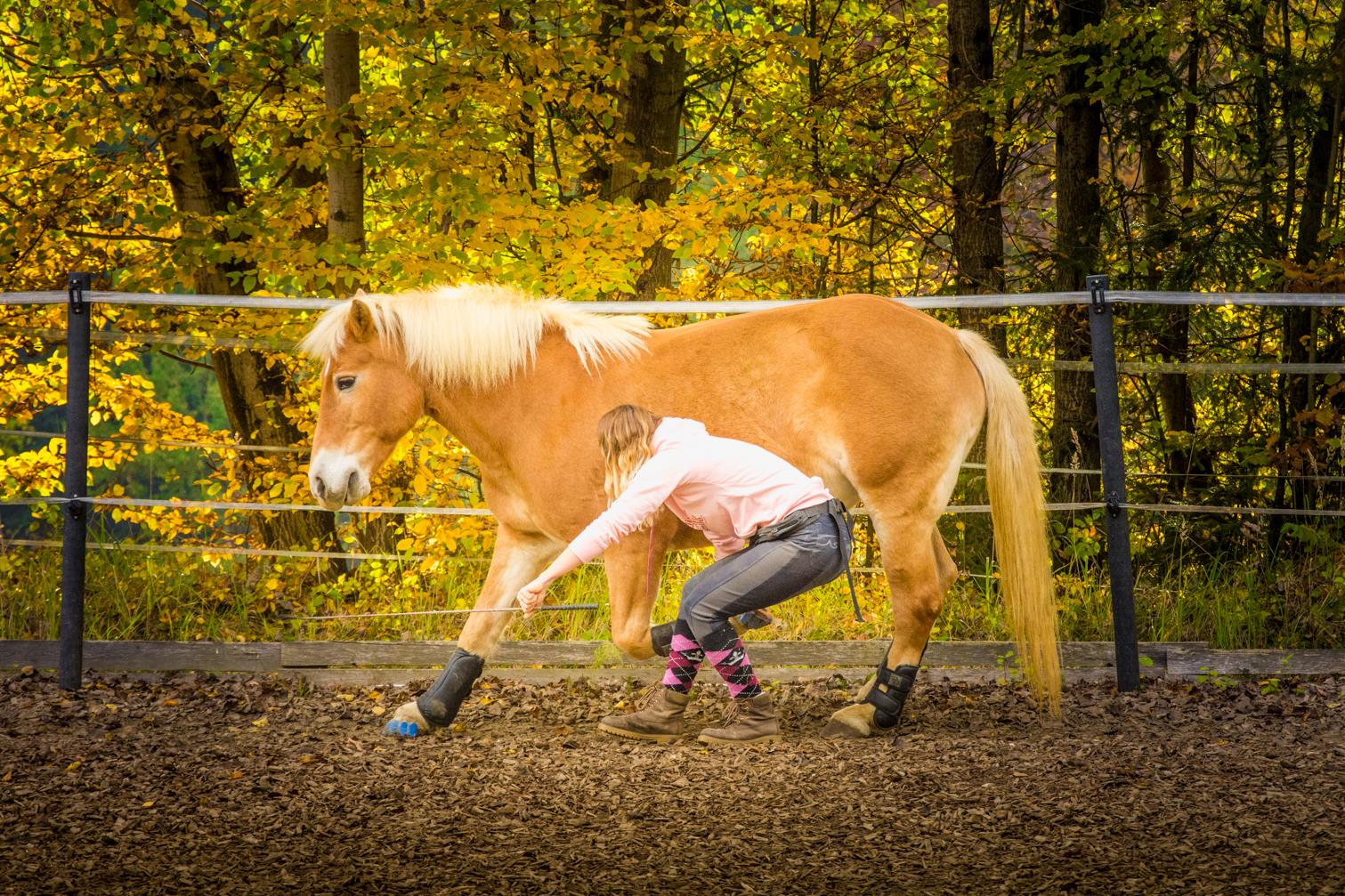 Wir sind unendlich dankbar, dass wir die Megasus Horserunners testen dürfen. Foto: Haflinger Austria