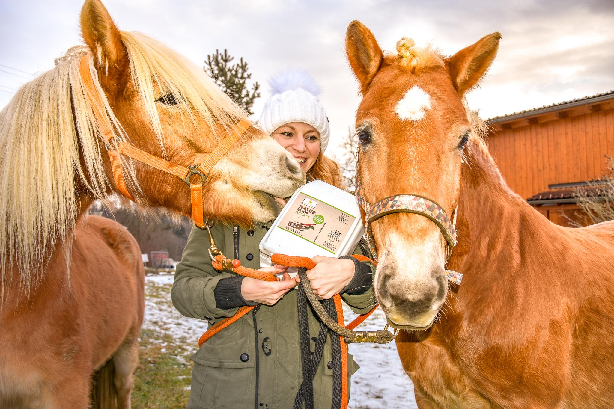 Rabella und Brutus lieben das Sonnenmoor! Foto: Haflinger Austria