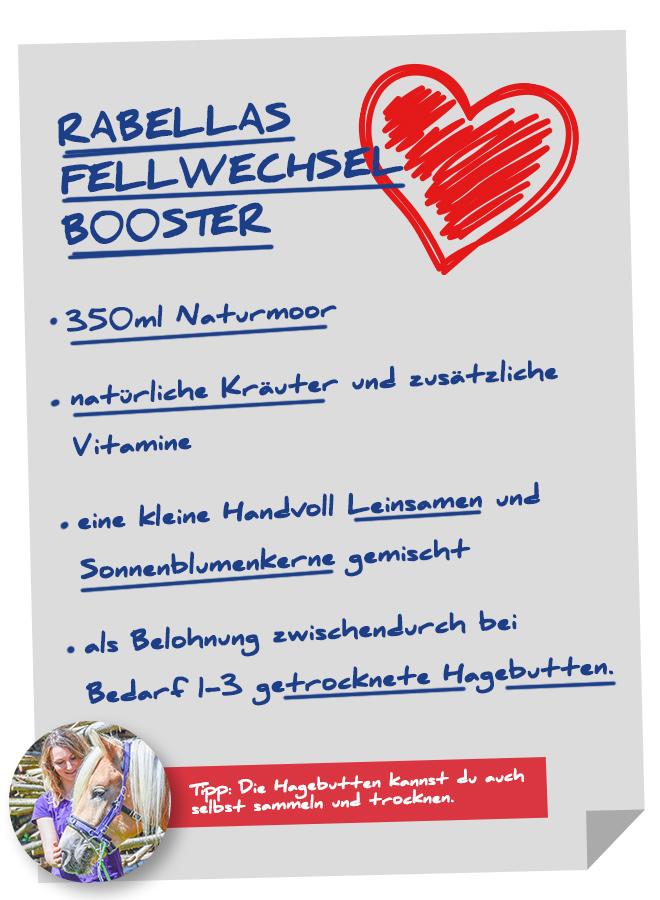 Unser Rezept für einen guten Fellwechsel. Foto: Haflinger Austria