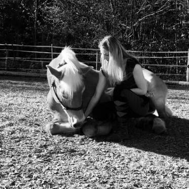 Erinnerungen an das beste Pferd der Welt. Foto: Haflinger Austria