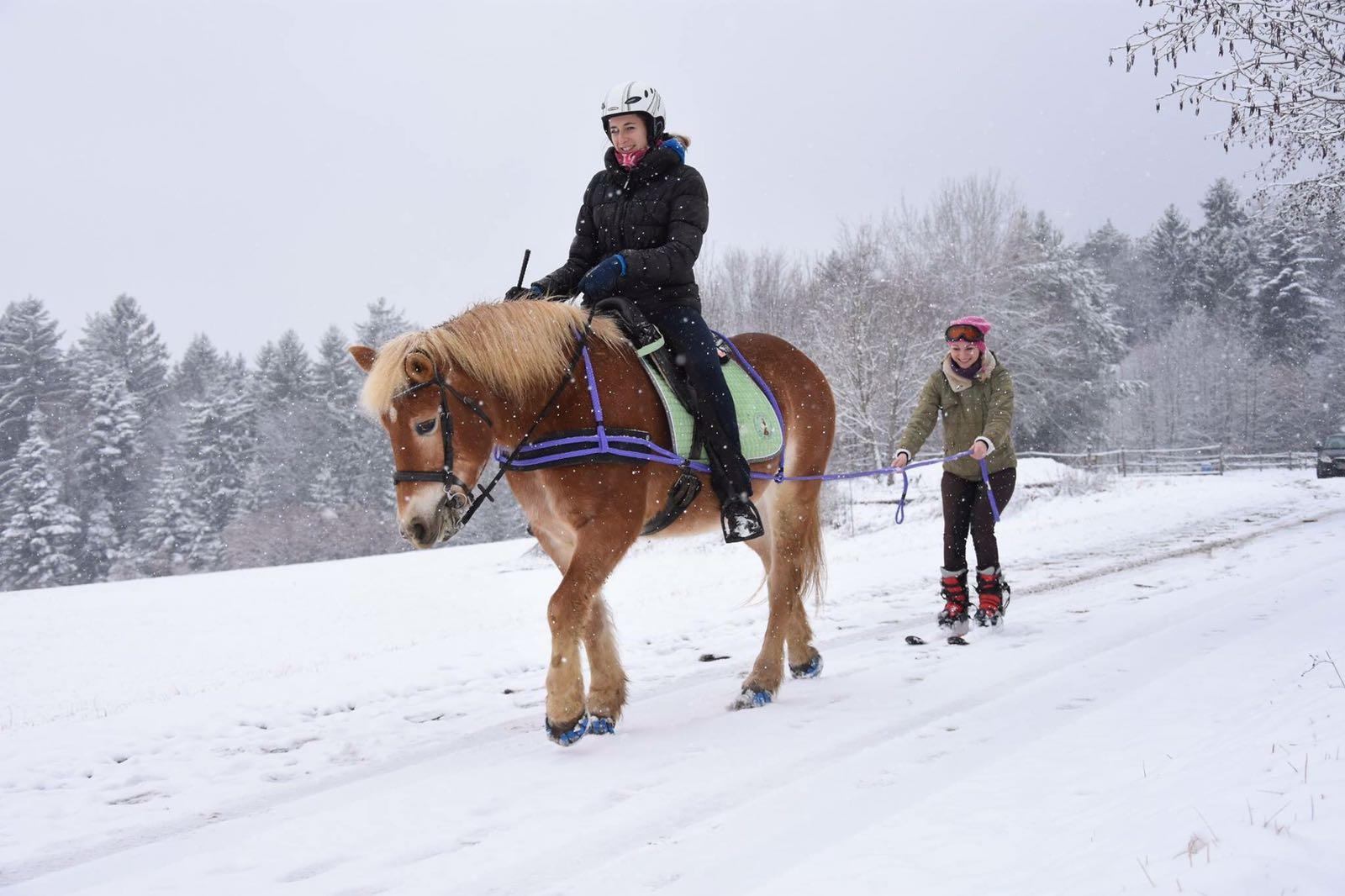 Wie alle Produkte von Sieltec, lässt sich auch das Skijöring-Set stufenlos verstellen. Foto: Haflinger Austria