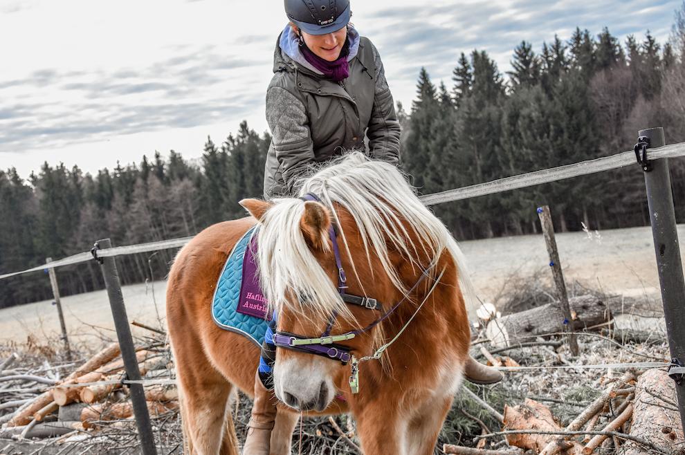 Hier seht ihr unsere Lieblingsfunktion beim Reiten und einen kleinen Einblick in Rabellas Reitausbildung. Foto: Haflinger Austria