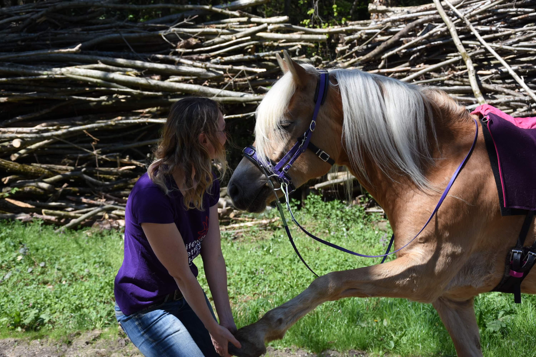 Ihr seid ein Team also hör deinem Pferd zu! Foto: Haflinger Austria